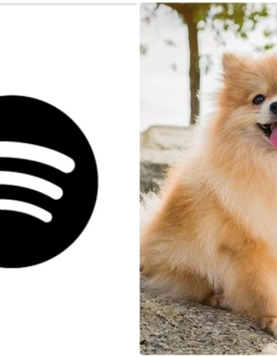Ever Thought, What Music Your Pet May Like? New Spotify Feature Makes It Possible